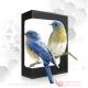 افکت های صوتی انواع پرندگان
