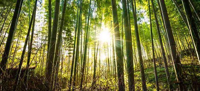صدای محیطی جنگل در شب و روز