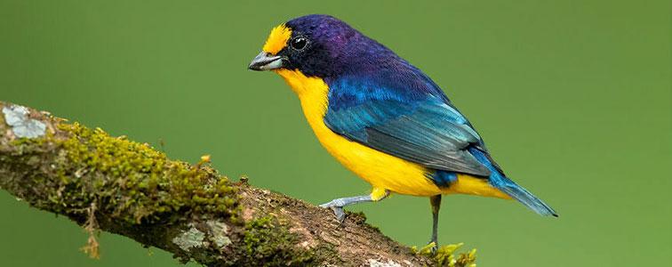 صدای پر زدن انواع پرنده