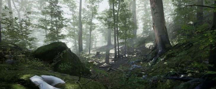 صدای محیط جنگل