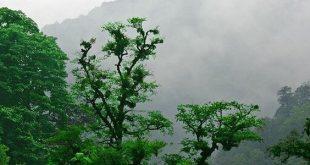 افکت صوتی جنگل و محیط جنگلی