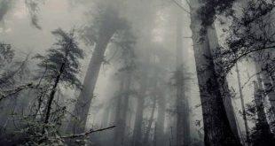 دانلود افکت صدای محیطی جنگل در شب
