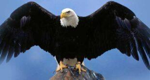 دانلود افکت صوتی عقاب