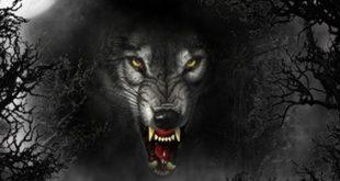 صدای عصبانی و پارس کردن گرگ نما