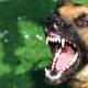 دانلود صدای پارس کردن سگ