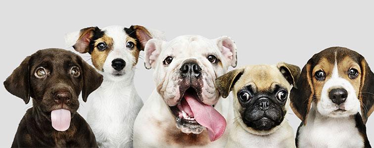 دانلود مجموعه کامل صدای سگ سانان