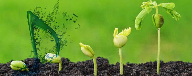 موسیقی بی کلام برنامه رویش و تولد